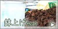 胡蝶蘭 鉢上げセット