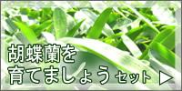 胡蝶蘭を育てましょうセット