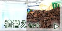 胡蝶蘭 植替えセット